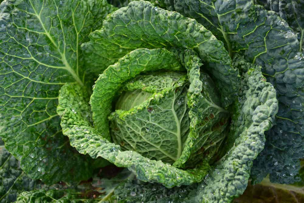 10 Reasons Why Kale is Part of a Healthy Diet.